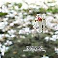 2010-0421-紙湖農場-油桐花之旅 (28).jpg