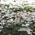 2010-0421-紙湖農場-油桐花之旅 (30).jpg