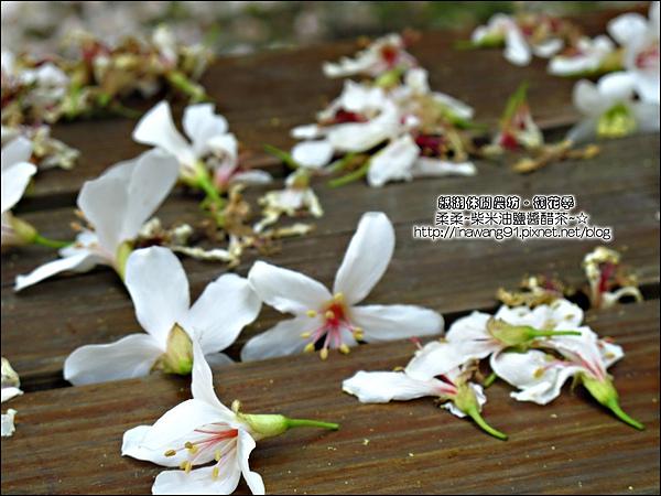 2010-0421-紙湖農場-油桐花之旅 (31).jpg