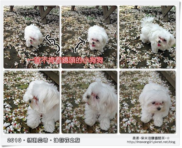 2010-0421-紙湖農場-油桐花之旅 (38).jpg