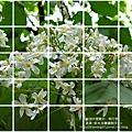 2010-0421-紙湖農場-油桐花之旅 (39).jpg