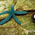 2009-0108 -屏東-海洋館 (6).jpg