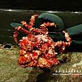 2009-0108 -屏東-海洋館 (7).jpg