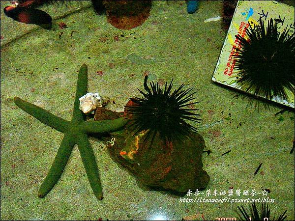 2009-0108 -屏東-海洋館 (8).jpg