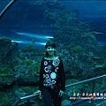 2009-0108 -屏東-海洋館 (9).jpg