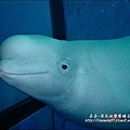 2009-0108 -屏東-海洋館 (13).jpg