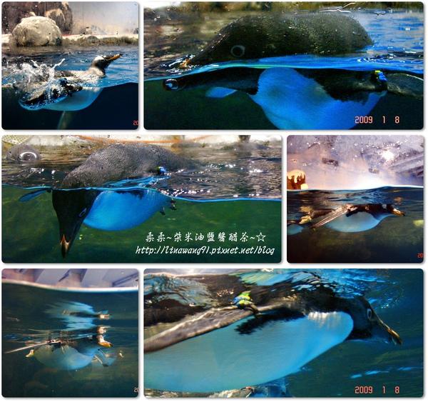 2009-0108 -屏東-海洋館 (24).jpg