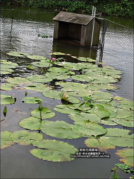 2010-0620-新屋花海農場 (10).jpg