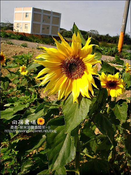 2010-0328-向陽農場 (20).jpg