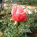 2011-0226-灣潭玫瑰草莓園 (13).jpg
