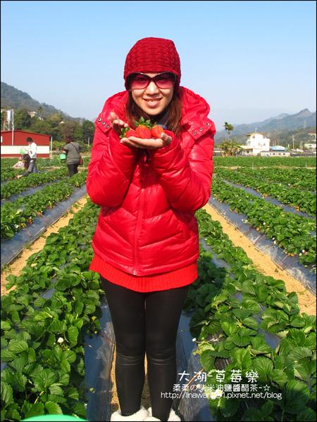 2011-0102-大湖採草莓 (20).jpg