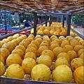 2010-1026~1102-新埔-金漢柿餅 (1).jpg