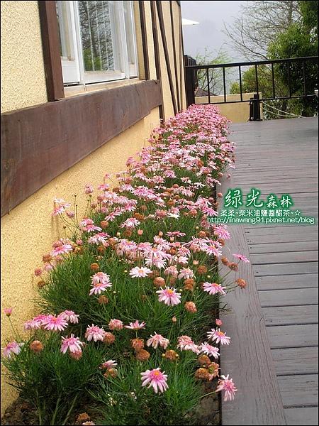 2010-0324-桃園-綠光森林 (3).jpg