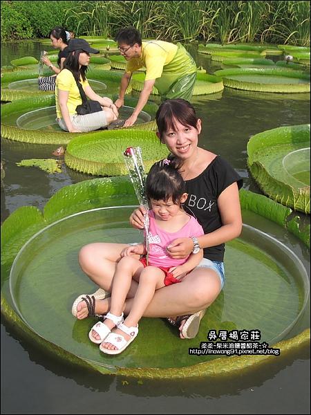 吳厝楊家莊-2010-0815 (18).jpg
