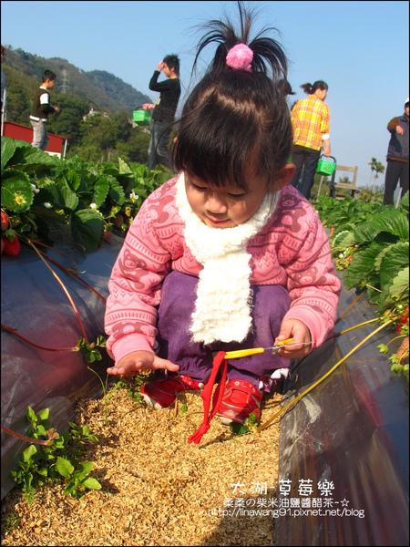 2011-0102-大湖採草莓 (26).jpg