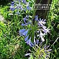 2010-0531-vilavilla山居印象農莊 (13).jpg