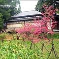 2011-0223-新竹公園-賞櫻花 (16).jpg