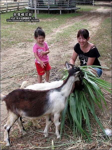 吳厝楊家莊-2010-0815 (42).jpg