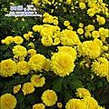 2010-1114-2010-銅鑼-杭菊芋頭節 (23).jpg