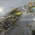 2010-0531-香山濕地-沼潮蟹與螺 (3).jpg