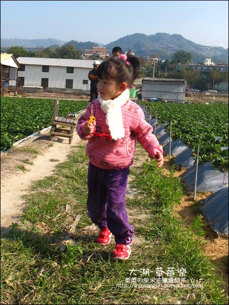 2011-0102-大湖採草莓 (11).jpg