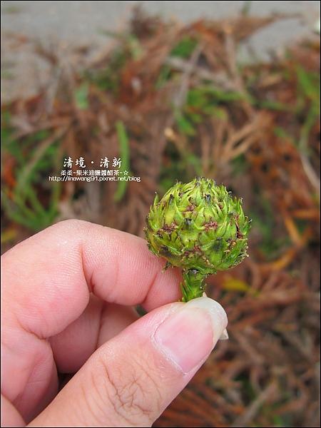 2010-0920-南投清境 (21).jpg