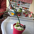 媽咪小太陽親子聚會-2011-0110-綠色-多肉植物 (20).jpg