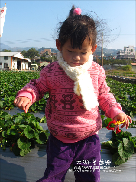 2011-0102-大湖採草莓 (9).jpg