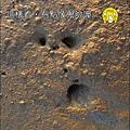 2010-0531-香山濕地-像鬼臉 (12).jpg