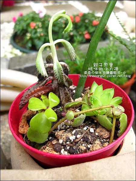 媽咪小太陽親子聚會-2011-0110-綠色-多肉植物 (23).jpg