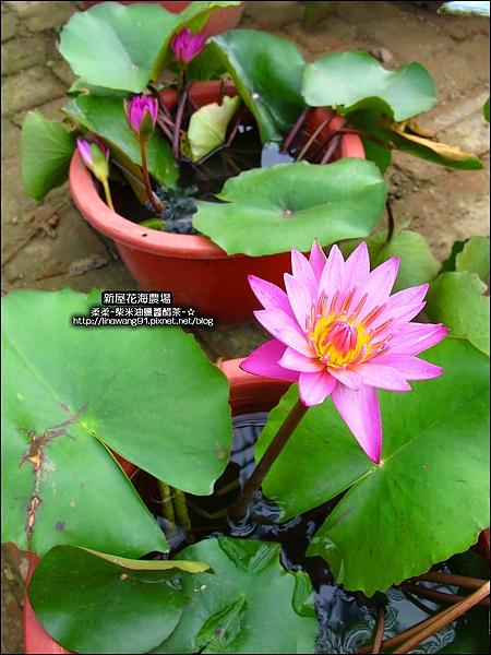 2010-0620-新屋花海農場 (17).jpg