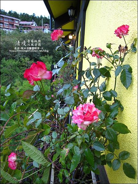 普羅旺斯玫瑰莊園清晨 -2010-0920 (6).jpg