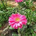 2011-0226-灣潭玫瑰草莓園 (9).jpg