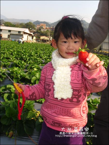 2011-0102-大湖採草莓 (17).jpg