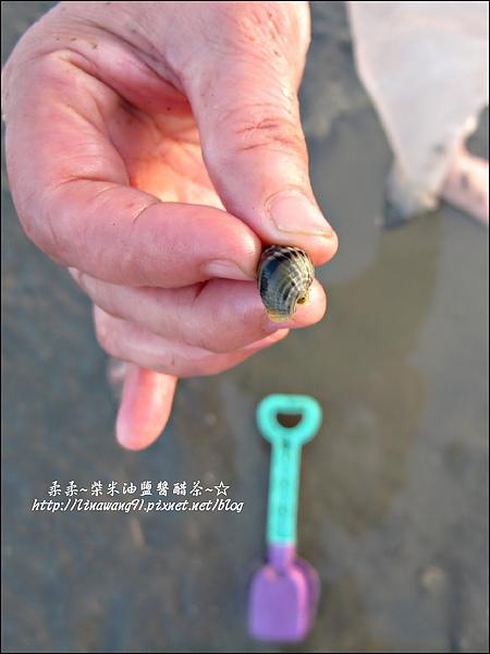2010-0531-香山濕地-織紋螺 (20).jpg