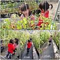 2011-0226-灣潭玫瑰草莓園 (61).jpg