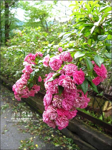 普羅旺斯玫瑰莊園清晨 -2010-0920 (12).jpg