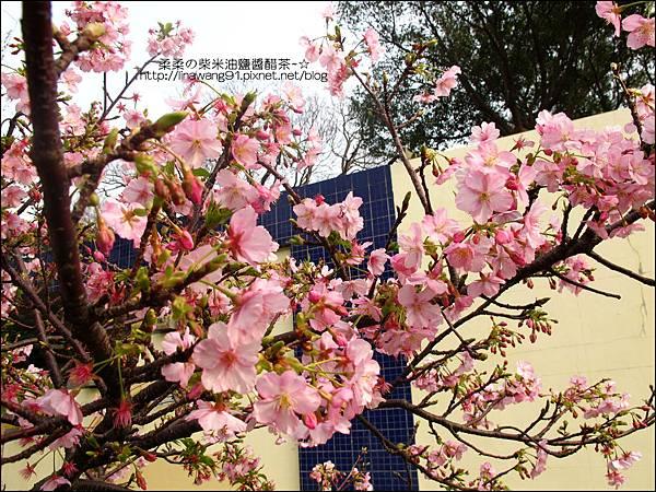 2011-0223-新竹公園-賞櫻花 (10).jpg