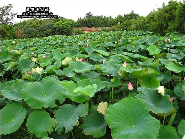 吳厝楊家莊-2010-0815 (52).jpg