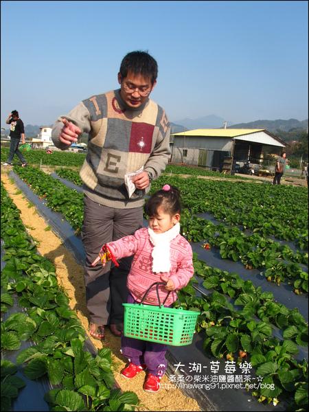 2011-0102-大湖採草莓 (7).jpg