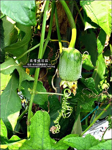 吳厝楊家莊-2010-0815 (32).jpg