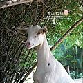 2010-0908-香山牧場 (29).jpg