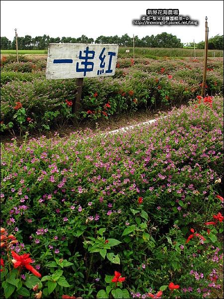 2010-0620-新屋花海農場 (8).jpg