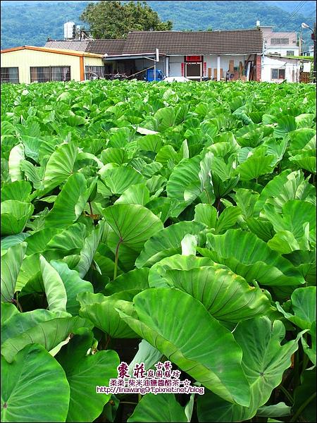 苗栗-公館-棗莊-2010-0702 (40).jpg