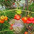 苗栗-公館-棗莊-2010-0702 (37).jpg