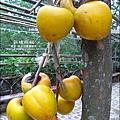 2010-1026~1102-新埔-衛味佳柿餅 (10).jpg