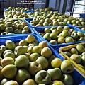 2010-1102-新埔柿餅節 (1).jpg