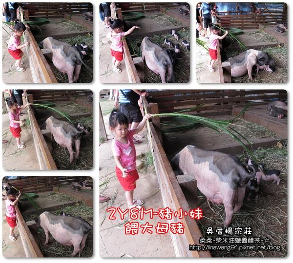 吳厝楊家莊-2010-0815 (55).jpg