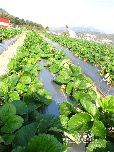 2011-0102-大湖採草莓 (15).jpg