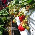 2011-0226-灣潭玫瑰草莓園 (5).jpg